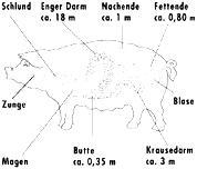 daermeschweingroesser-blackwhite